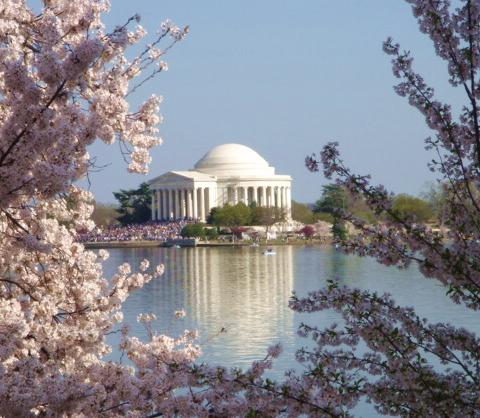 cherry tree blossom festival. Cherry Blossom Festival